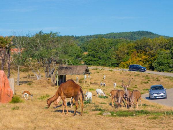 Safari de Peaugres animaux d'Afrique